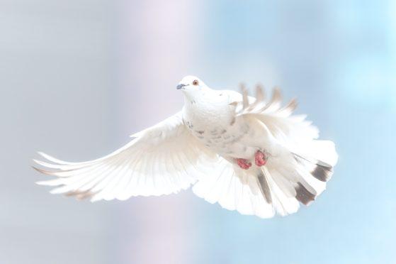 Eine Ausarbeitung zum Geist Gottes im Alten Testament der Bibel